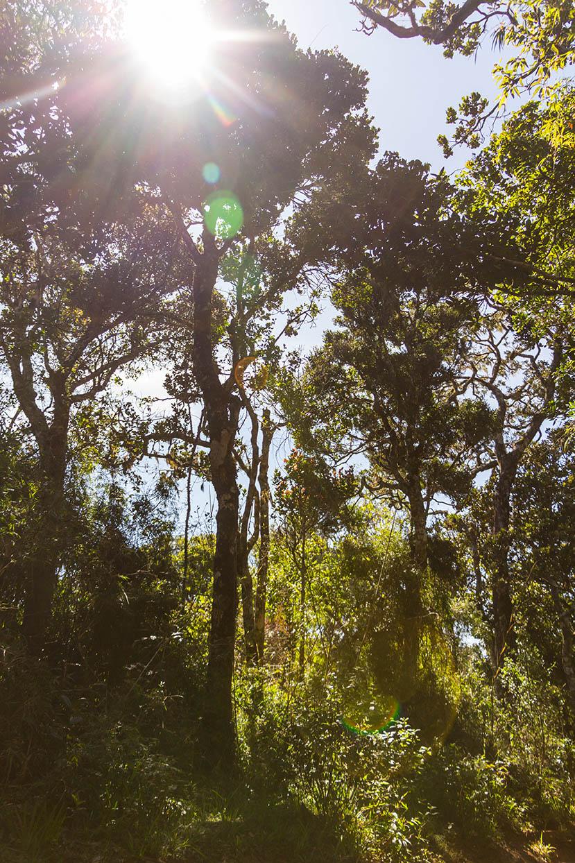 Sri Lanka Nature Holiday Rainforest