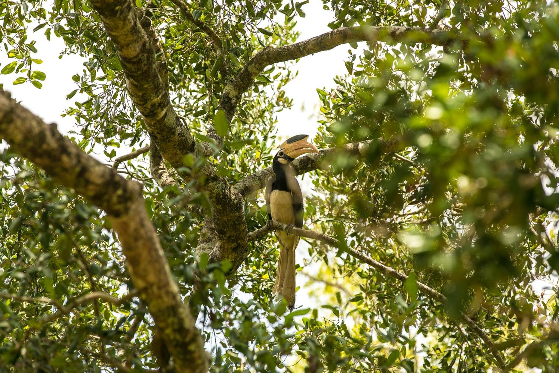 Birds in South Sri Lanka