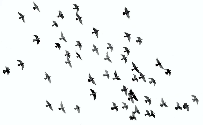 Bird Watching Trips in Sri Lanka