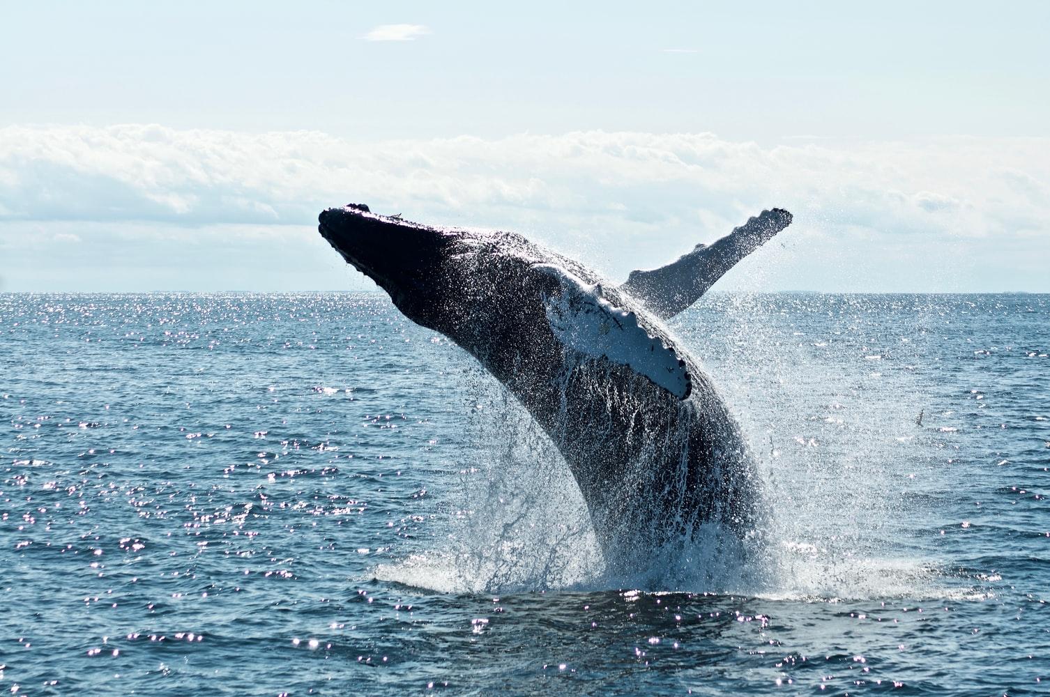 Going Whale Watching in Mirissa Sri Lanka